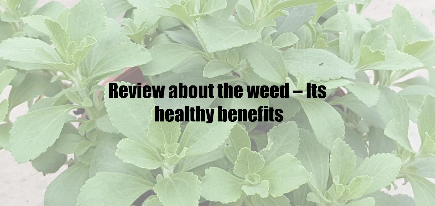 Review about the weed – Its healthy benefits
